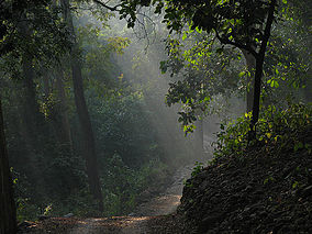 History of Jim Corbett National Park (Corbett Tiger Reserve), Online Booking & Reservation, jimcorbettnationalparkonline.com