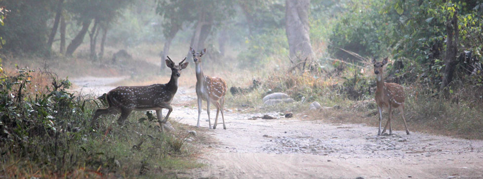 Contact Us, Jim Corbett National Park Uttarakhand India, Book online your visit to Jim Corbett National Park in Uttarakhand, India jimcorbettnationalparkonline.com